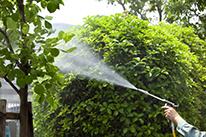 植木・庭木の消毒