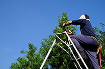 庭木・生垣の刈込み