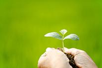 植木・庭木の植栽