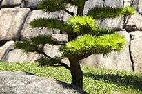 植木・庭木の移植